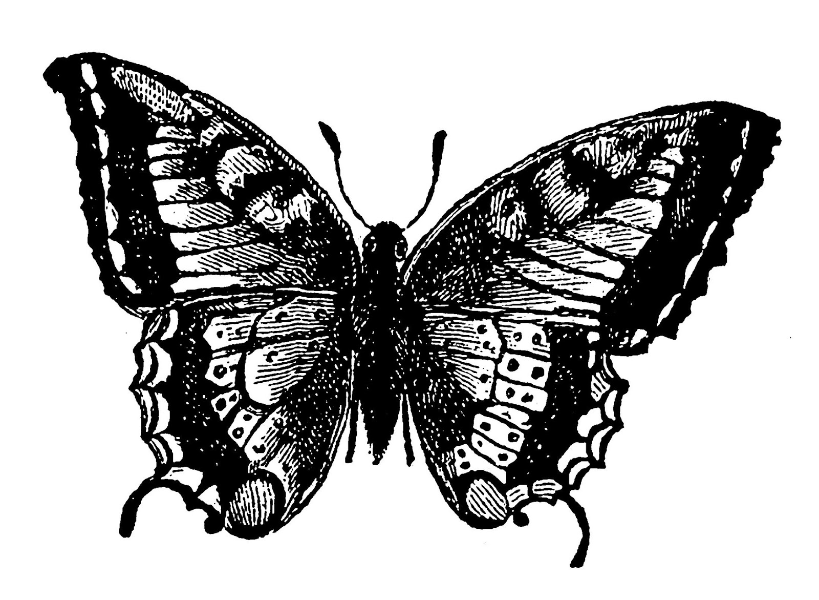 Digital Stamp Design Free Digital Insect Butterfly