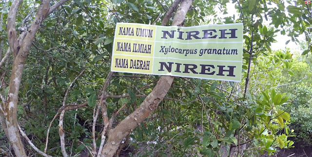 Tumbuhan bakau Jenis Nireh