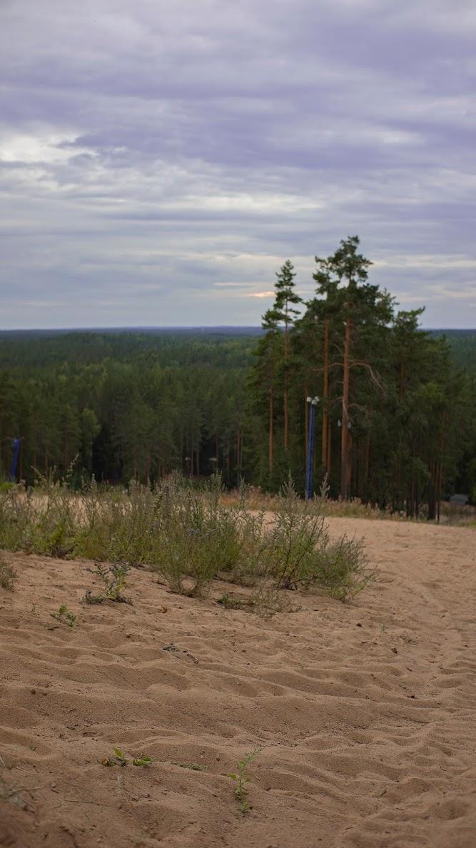 Зеленогорск гора в лесу сосны горизонт Ленинградская область