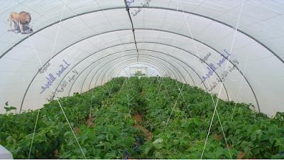 مسببات المرض والموت عند النبات - الظروف غير الملائمة - درجة الحرارة - الصوبات