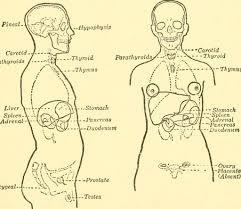 body of lies/body mechanics