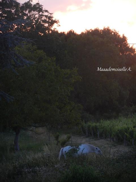 Coucher de soleil et cheval