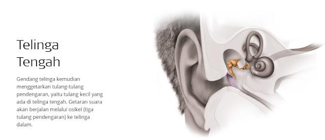 telinga tengah