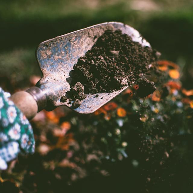How To Grow A Home Flower Garden