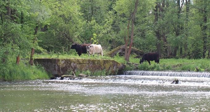 Ландшафтный парк реки Быстрица – отдых возле Вроцлава
