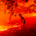 Desalojan a miles de personas por incendios forestales en California