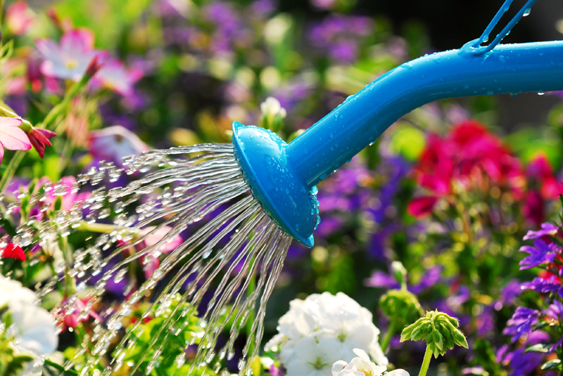 When Is the Best Time to Water Plants?