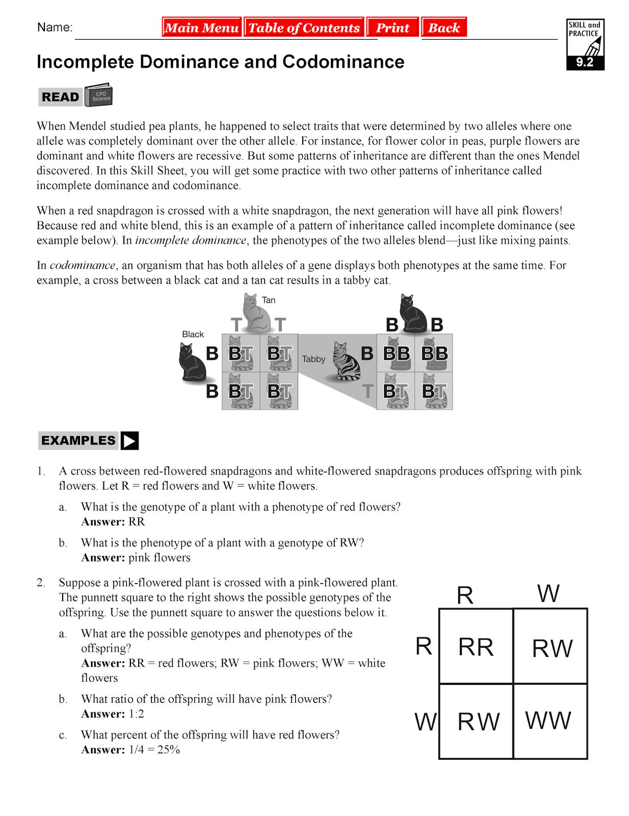 Worksheet Incomplete And Codominance Worksheet Worksheet