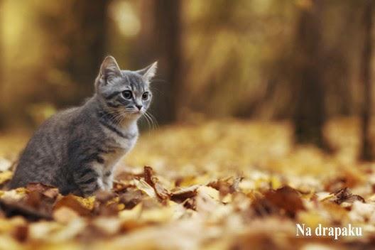 Nierasowe koty z rodowodem