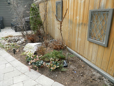 Leaside Toronto Spring Garden Cleanup after by Paul Jung Gardening Services