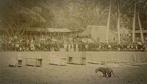 Pertarungan Manusia Melawan Harimau
