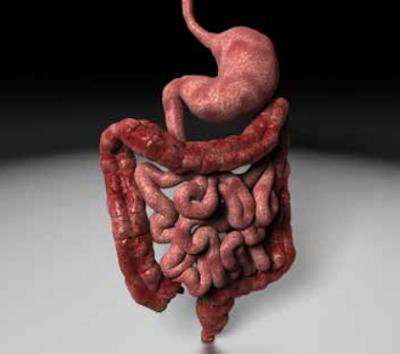 علاج مرض القولون نهائيا مع منتج شيك اوف الامارات
