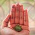 ZPP Meio Ambiente: Como preservar o meio ambiente com atitudes simples?