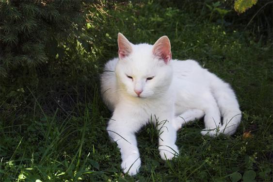 Metsästyslaki Kissa