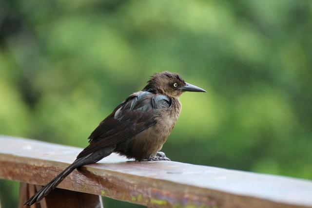 Pájaro al amanecer en nuestra habitación