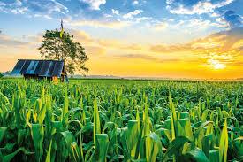Úc giúp Việt Nam phát triển nông nghiệp