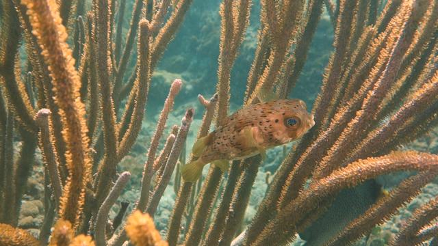 Ft. Lauderdale Shore Dive