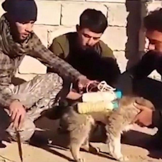 Bom Anjing