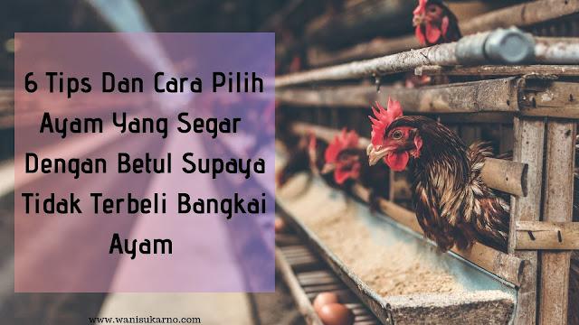 6 Tips Dan Cara Pilih Ayam  Yang Segar Dengan Betul Supaya Tidak Terbeli Bangkai Ayam