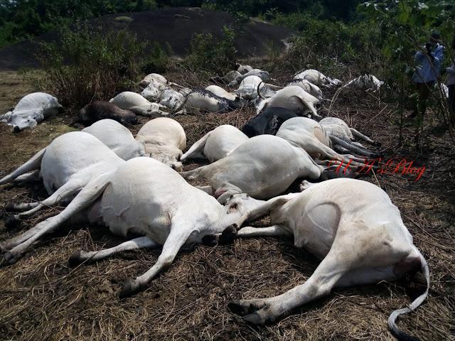Lightning kills 36 cows on Ondo 'sacred mountain'