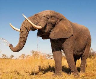 بحث حول الحيوانات الاليفة