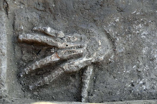 A severed right hand discovered in front of a Hyksos palace at Avaris