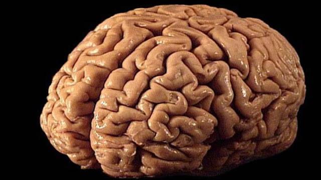 """¡Cuidado con las mentiras! """"Corrompen"""" tu cerebro"""
