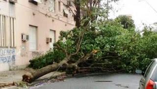 El chico de 16 años perdió la vida cuando una palmera le cayó encima. Las ráfagas de viento superaron los 100 km/h y generaron graves destrozos en la provincia.