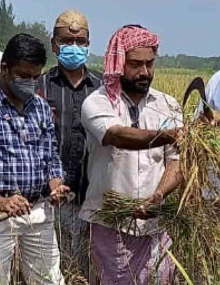 Paddy cultivation on fallow land