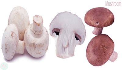 মাশরুম, ব্যাঙের ছাতা, mushroom; فطر; Champignon; Pilz; कुकुरमुत्ता; Jamur; fungo; きのこ; Cogumelo; грибной; Mushroom vegetable; mantar; مشروم