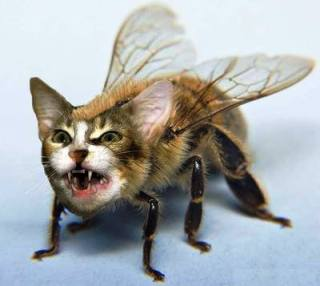 Rasta Lion Hd Wallpaper Funny Bee Images Funny Animal