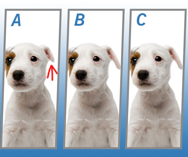 Answers Of Spot The Different Dog Quiz - SK GENIUS