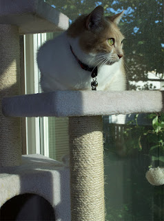 Real Cat Webster on cat tree