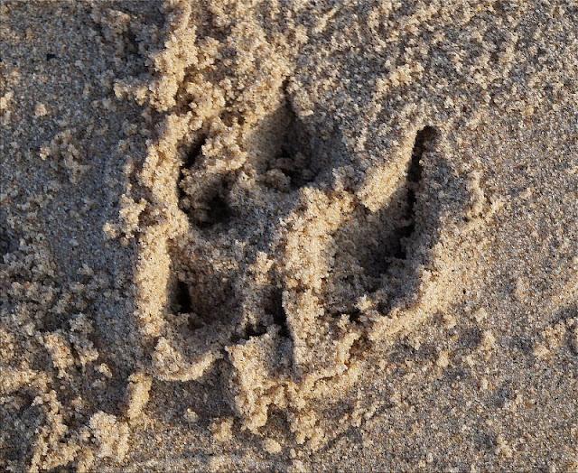 """Phantastische Freunde: """"Emmi und Einschwein"""" von Anna Böhm (+ Verlosung). Meine Kinder finden: Auch eine Spur am Strand kann von einem Fabeltier stammen!"""