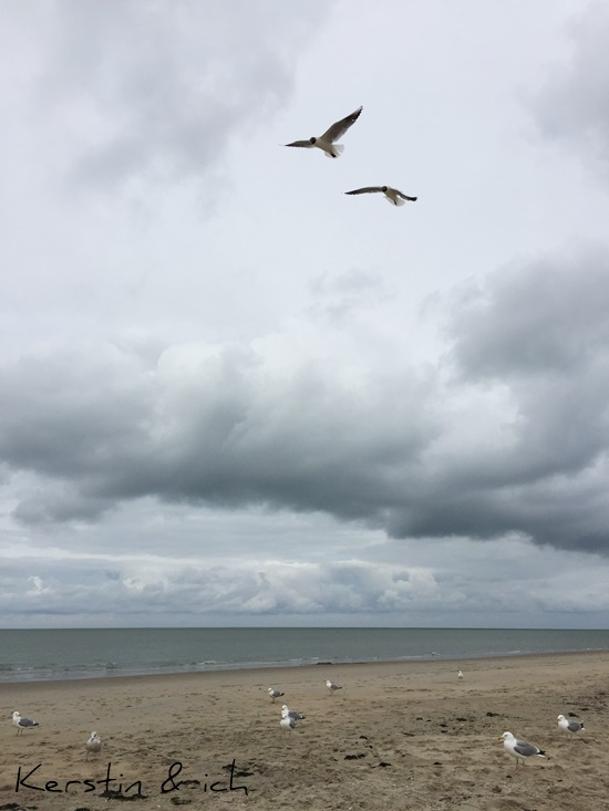 Holland Strand Meer Möwe