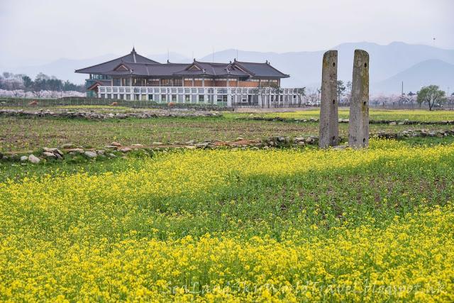 南韓慶州皇龍寺油菜花田