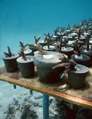 Những chậu cây mô phỏng các cây san hô