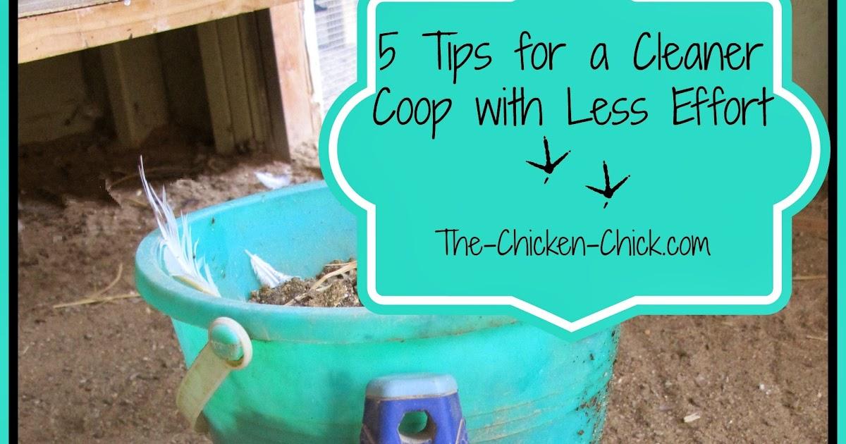 how often do you clean chicken coop 3