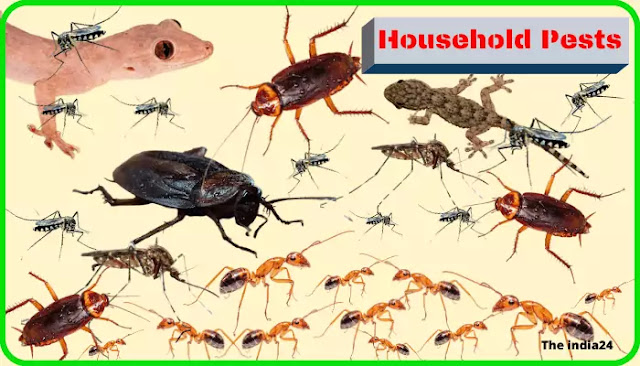 Tips for Mosquitoes, Ants, Lizards, and Cockroaches.
