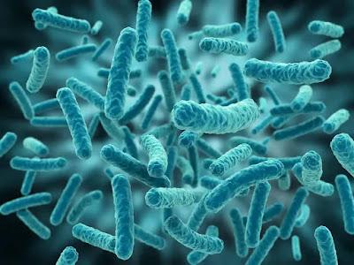 تحميل صور عالية الدقة للفيروسات والبكتيريا من شترستوك3 - هارد المصمم العملاق