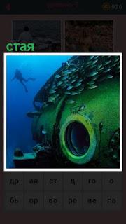 аквалангист наблюдает за стаей рыб под водой
