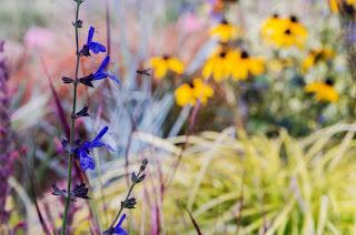 plantas vivaces, aprender paisajismo, jardines sostenibles, paisajismo