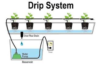 drip sistem dalam hidroponik dan kekurangannya