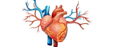 المعدل الطبيعي لنبضات قلبك, الازمة القلبية في المنام, الازمة القلبية عند النساء, الازمة القلبية ويكيبيديا, الازمة القلبية اثناء الرياضة, الازمة القلبية اثناء النوم, الازمة القلبية والذبحة الصدرية, الازمة القلبية الحادة, الازمة القلبية موضوع, اسعافات اولية للأزمة القلبية, ما هي الازمة القلبية, ضربات القلب الطبيعية, ضربات القلب, ضربات القلب القوية, ضربات القلب غير منتظمة, ضربات القلب السريعة, ضربات القلب السريعة المفاجئة, ضربات القلب عند الاطفال, ضربات القلب الغير منتظمة, ضربات القلب ٩٠, ضربات القلب حسب العمر, معدل ضربات القلب الطبيعية, معدل ضربات القلب الطبيعي اثناء ممارسة ,الرياضة, معدل ضربات القلب اثناء النوم, معدل ضربات القلب للرياضيين, معدل ضربات القلب اثناء المشي, معدل ضربات القلب لمرضى الضغط, معدل ضربات القلب للاطفال, معدل ضربات القلب الطبيعي للاطفال, معدل ضربات القلب بعد الاكل, معدل ضربات القلب الطبيعي, معدل ضربات القلب الطبيعي أثناء ممارسة ,الرياضة, معدل ضربات القلب الطبيعي للنساء, معدل ضربات القلب أثناء النوم, معدل ضربات القلب عند الاطفال, معدل ضربات القلب اثناء الجري, معدل ضربات القلب في الدقيقة, معدل ضربات القلب لكبار السن, معدل ضربات القلب الطبيعي للنساء الحوامل, معدل ضربات القلب الطبيعي حسب العمر,