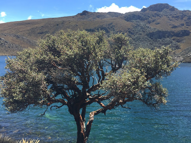 Tree By Lake