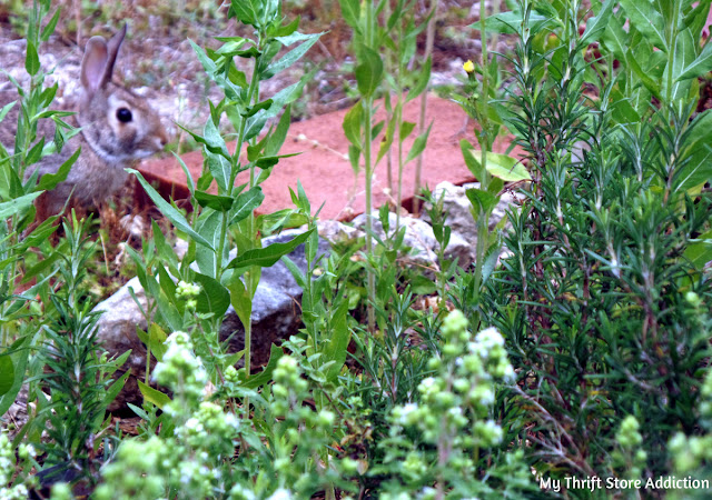 bunny visitor in the garden