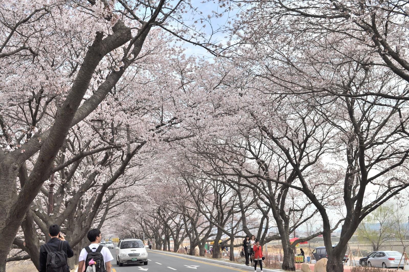 Spring Time My Favorite Season In South Korea Award