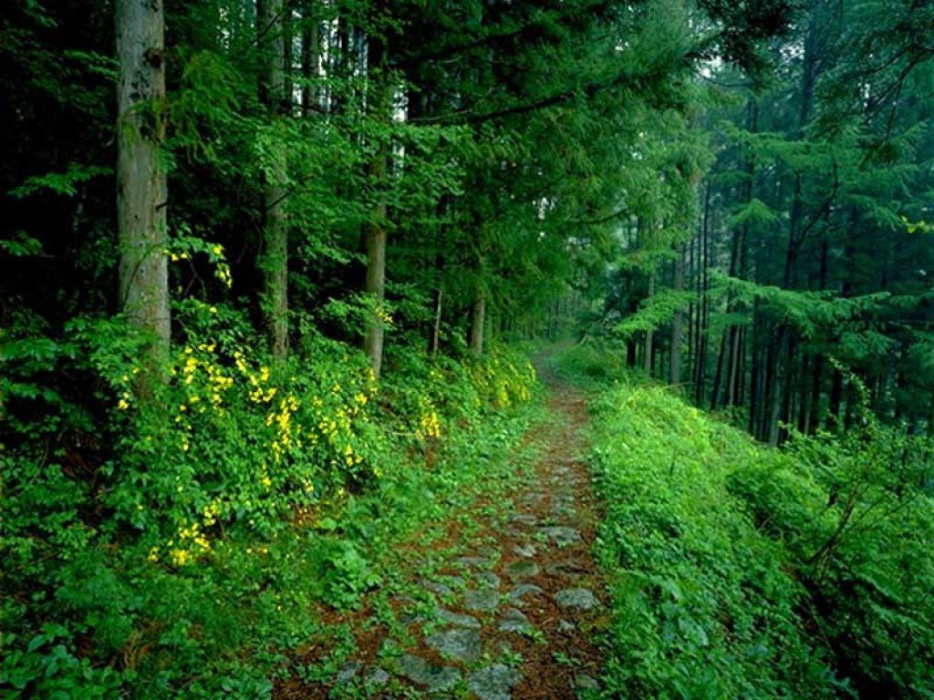 Funny Pictures Gallery: Forest background, forest ... - photo#42