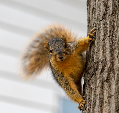 More squirreliness...