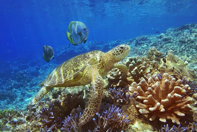 Beautiful reefs at Racha Yai and Racha Noi